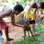 Injured Deer found at Guwahati