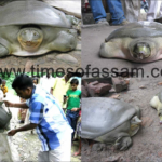 Turtles rescued in Jorhat
